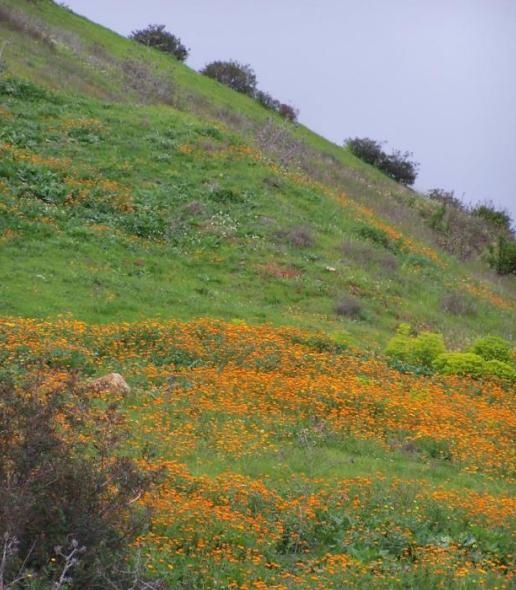 Moroccan hillside
