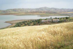 Countryside (Volubilus area)